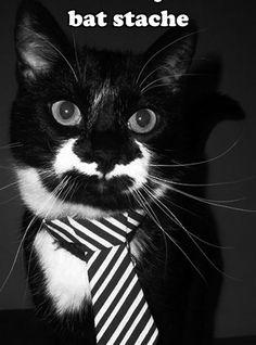 Everything about this is awesome  Bat-Stache Cat ... cat with a Bat-moustache !