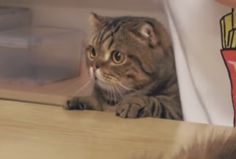 Cute Baby Cats, Cute Funny Animals, Fluffy Animals, Animals And Pets, Cat Emoji, Cat Icon, Kawaii Cat, Cute Animal Pictures, Cute Creatures