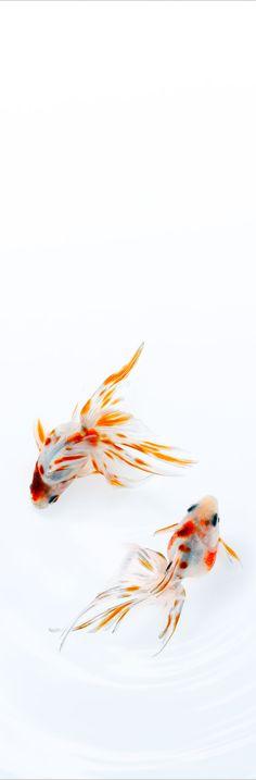 Small colorful fish  .........レ O √ 乇 ♥