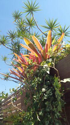 Plantas aéreas - bromelias