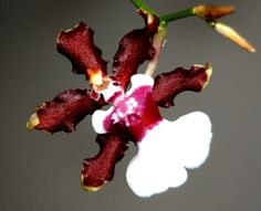 My Work: Orchid Love