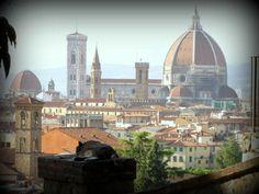Gatti a Firenze Credits: Ana Luiza Oliveira