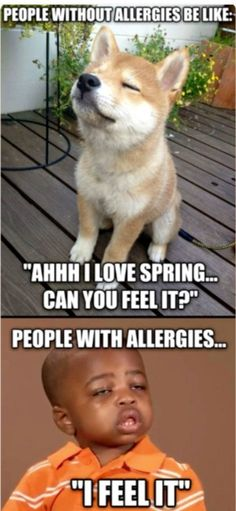 funny-people-allergies-spring-sick-kid Sometimes we have to laugh to keep from crying! Enjoy these allergy memes full of humor to keep us laughing. Funny Shit, Haha Funny, Funny Cute, Funny Jokes, Funny Stuff, Funny Laugh, Funny Things, Funny Friend Memes, That's Hilarious