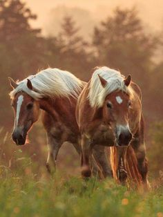 Together we are stronger 😙💫 Horses And Dogs, Cute Horses, Horse Love, Wild Horses, Most Beautiful Horses, All The Pretty Horses, Beautiful Creatures, Animals Beautiful, Zebras