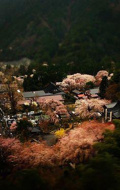 身延山 久遠寺 #sakura #CherryBlossom