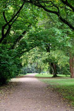 Westonbirt Arboretum Fall Winter, Autumn, Landscape Photography, Country Roads, Fall Season, Scenery Photography, Fall, Landscape Photos, Scenic Photography