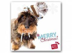 Hunderassen WeihnachtskartenMyrna Weihnachtskarte: Dackel rauhaar
