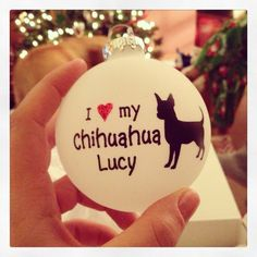 Chihuahua love...need to get one for my papa <3