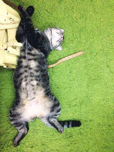 Tj Cat | Pawshake