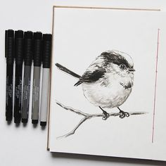 Cute tit bird for Day 28 of #inktober  #inktober2016 #ink #fabercastell #fabercastellpitt #sketchbook #tit #bird #birdartist #animalart #animalartists #wildlife #sketchbookart #sketchbookartist #katerinakart
