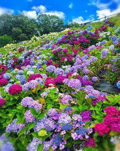 8 Flower Landscape Ideas For Your Garden – Garden Ideas 101 Beautiful Landscapes, Beautiful Gardens, Wild Flowers, Beautiful Flowers, Hydrangea Garden, Hydrangeas, Flower Landscape, Dream Garden, Amazing Nature