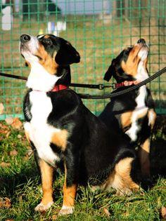 Zgłoś psa na kurs – PSIKUrS – Szkolenie Psów Tarnowskie Góry