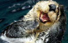 I otter be in pictures...