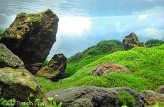 2012 AGA Aquascaping Contest - Entry #96