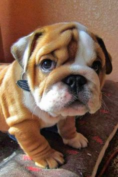 5 Puppies that will make you Hug your Computer Screen