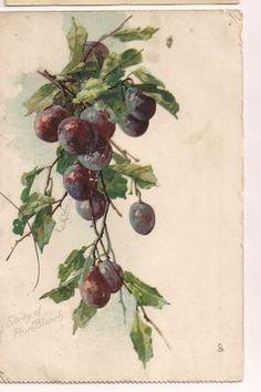 Art postcard C Klein Still life Plum Tree by Publisher: Raphael Tuck 4075