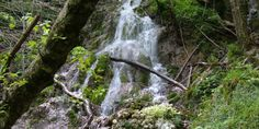 PARCO REGIONALE MONTI PICENTINI. Area naturale protetta dalla regione Campania ed ospita una fauna che include animali come l'aquila reale, il lupo, il picchio nero, il falco e molti altri animali. Per quanto riguarda la flora, abbiamo un bosco che accoglie una vista quantità di alberi, come il faggio ed il castagno. All'interno sono presenti aree attrezzate per pic-nic.  Dove si trova: Eboli Salerno