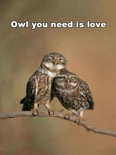 Owl you need is love,owl u need,love is all you need! This is my favorite animal and one of my favorite songs.