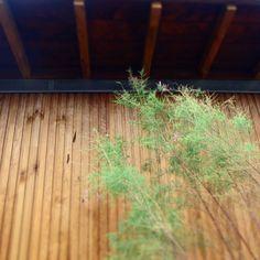 wooden house Wooden House, Herbs, Gardens, Garden Landscaping, Atelier, Herb, Spice
