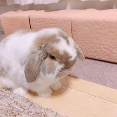 Pretty Animals, Cute Little Animals, Cute Funny Animals, Cute Baby Bunnies, Cute Babies, Dwarf Bunnies, Bunny Rabbits, Netherland Dwarf Bunny, Cutest Bunny Ever