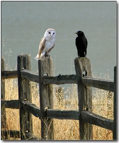 """""""Crow, if you ask me how many licks it takes to get to the center of a Tootsie Pop again, I'm gonna have to hurt you!"""""""