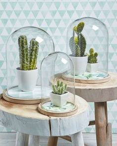 32 Shabby Chic Living Room Decor Ideas for a Comfy and Gorgeous Interior - The Trending House Chic Living Room, Home And Living, Room Inspiration, Interior Inspiration, Decoration Cactus, Deco Nature, Deco Floral, Cactus Y Suculentas, Cacti And Succulents