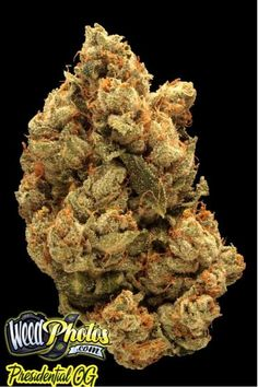 Presidential OG Marijuana Strain Review and Photos --  #Presidential_OG