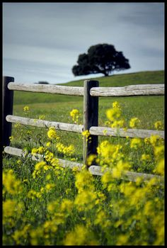 Fence Line by Dan Williams. The mustard is a blooming and this is such a peaceful part of the ranch. Country Fences, Country Roads, Old Fences, Felder, Backyard Landscaping, Landscaping Ideas, Mellow Yellow, The Ranch, Country Life