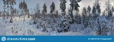 Photo about Panorama photo of winter landscape in Hedmark. Panoramic winter scene in january. Snowy winter landscape with trees covered in snow. Image of panoramic, trees, landscape - 140515178 Winter Szenen, Snowy Trees, Free Stock Photos, January, Scene, Illustration, Outdoor, Image, Landscaping