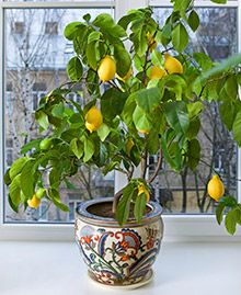 Gardening can be a rewarding hobby all year either indoors or outside. However, there are an abundance of plants that lose their leaves and blooms during t