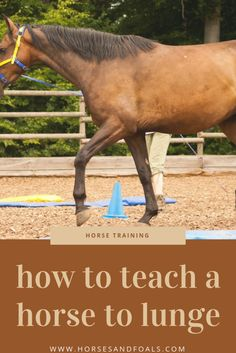 Horse Training Tips, Horse Tips, Lunging Horse, Reining Horses, Appaloosa Horses, Horse Exercises, Training Exercises, Verbal Cues, Riding Lessons