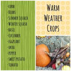 What are the Warm Weather Crops? Corn Beans Summer Squash Winter Squash Basil...see more   PreparednessMama