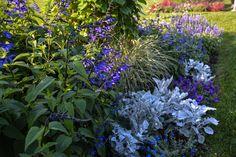 Perennial Plant Association (PPA) Symposium 2016 Recap, Thinking Outside the Boxwood
