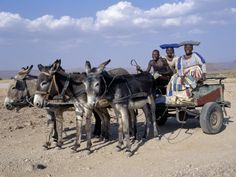 Herero Man and Two Women Ride Home in a Donkey Cart, Namibia A Donkey, Nursery Paintings, Country Art, Africa Travel, Zebras, Animals And Pets, Find Art, Framed Artwork, Horses