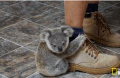 Baby drop bears start their training early...