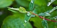 Free Image on Pixabay - Drop, Drops, Rain, Leaves, Water Free Stock Photos, Free Photos, Green Funeral, Rain Drops, Shutter Speed, Plant Leaves, Festivals, Eco Friendly, Ideas
