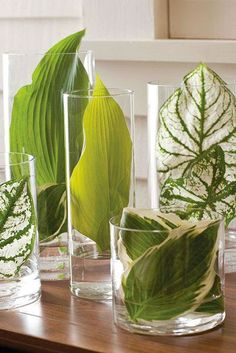 Glassy Leaves - 15 Creative Ways To Decorate With Leaves - Photos #tropicaldecor