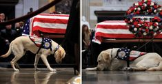 Dog Behavior George H. Bush's Beloved Service Dog 'Sully' Has A Heartwarming New Mission - You're a good boy, Sully! Dog School, George Hw, Dog Pee, War Dogs, Sully, Service Dogs, Dog Behavior, Dog Training Tips, Beautiful Dogs