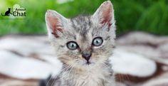 Petit chaton : la naissance et les premiers jours du jeune animal