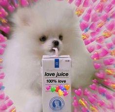 WUF The post WUF appeared first on Kermit the Frog Memes. Sapo Meme, Memes Amor, Memes Lindos, Heart Meme, Heart Emoji, Cute Love Memes, Cute Love Pics, Love Me Meme, Wallpapers Android
