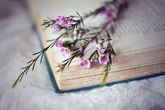 Books and flowers <3