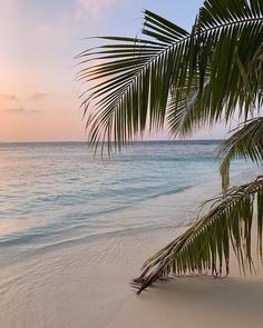 Image uploaded by Find images and videos about beach and ocean love sea on We Heart It - the app to get lost in what you love. Beach Aesthetic, Summer Aesthetic, Aesthetic Yellow, Japanese Aesthetic, Photo Wall Collage, White Sand Beach, Summer Beach, Palm Trees Beach, Beach Pictures