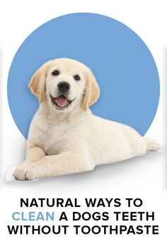 Natural Ways to Clean Dogs' Teeth Without Using Toothpaste Cute Dog Pictures, Dog Teeth, Teeth Cleaning, Dogs And Puppies, Doggies, Training Your Dog, Mans Best Friend, Dog Grooming, Yorkie