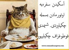 Besmele Phone Backgrounds, Islam, Cats, Ottoman, Animals, Funny Pics, Gatos, Animales, Animaux