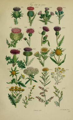 British wild flowers. - Biodiversity Heritage Library