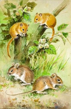 Dormouse and Field Mouse
