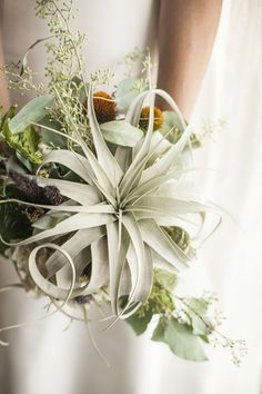 Air plant bouquet | Photo by Cornerstone Photography