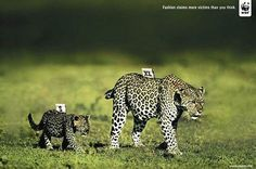 creative advertising #wwf
