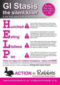 GI Stasis - how to spot if your rabbit is ill