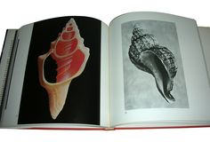 The Shell: Gift of the Sea by Hugh and Marguerite Stix and R. Tucker Abbott. Photograph by H. Landshoff.
